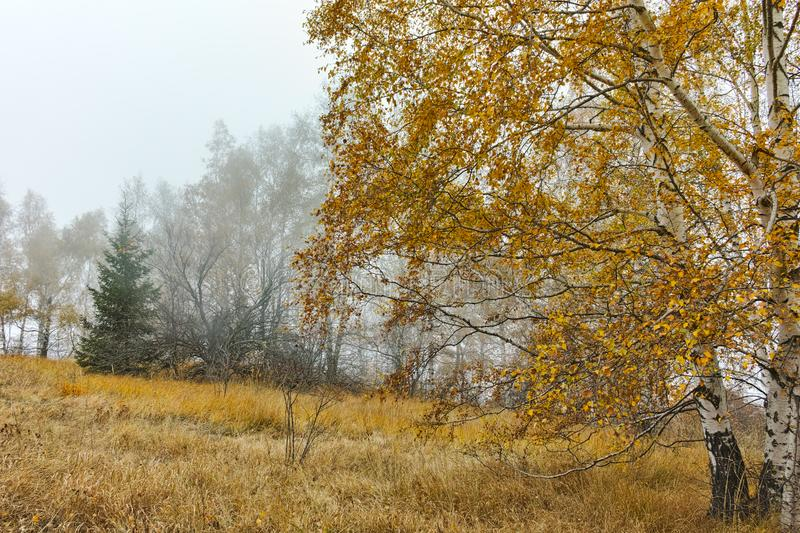 Autumn Landscape with yellow trees and fog, Vitosha Mountain, Bulgaria stock photography
