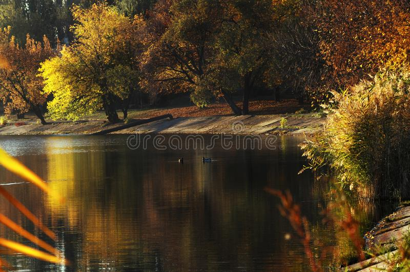 Autumn landscape, yellow trees near a calm river. Autumn landscape, yellow trees near the calm river early in the morning stock photos