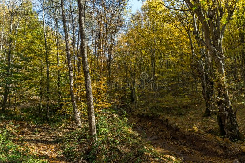 Autumn Landscape with yellow trees near Devil town in Radan Mountain, Serbia stock photography
