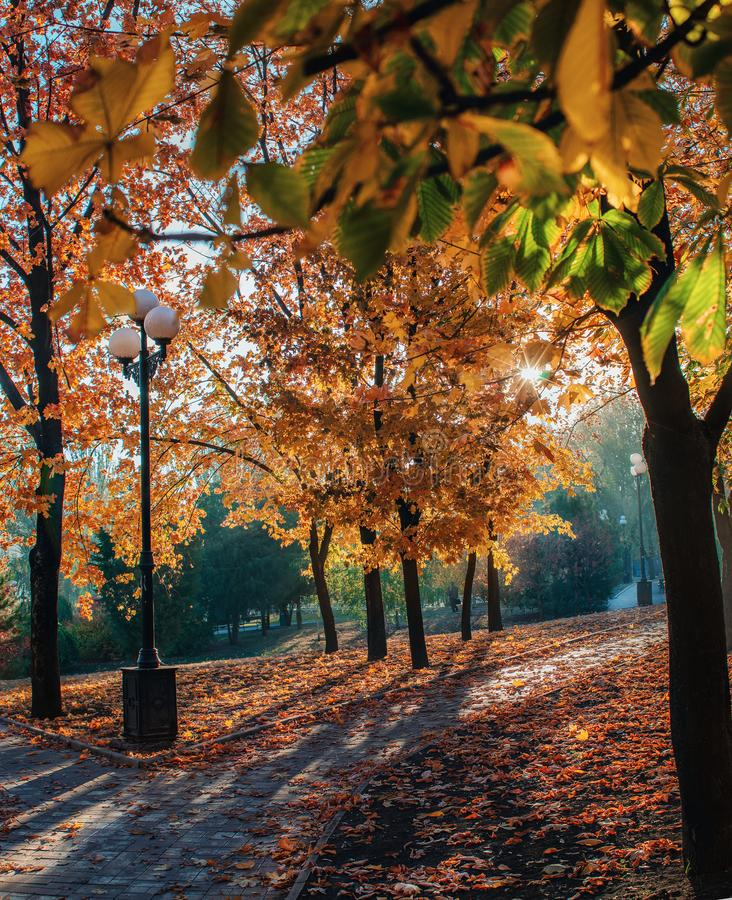 Autumn landscape, yellow trees in the park. Early in the morning stock photos