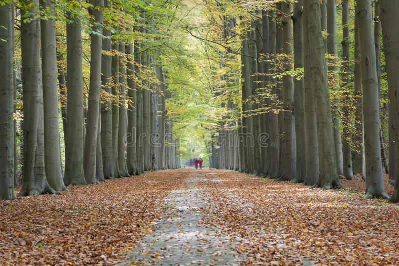 Autumn lane. Couple of walkers strolling in a beautiful lane with tall trees on both sides of the pathway in autumn, leading to a colorful and symmetrical royalty free stock image