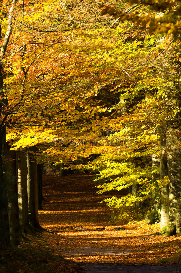 Autumn lane stock photo