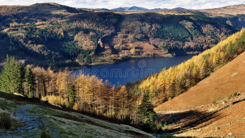 Download Autumn Larches, Thirlmere stock image. Image of district - 17789679