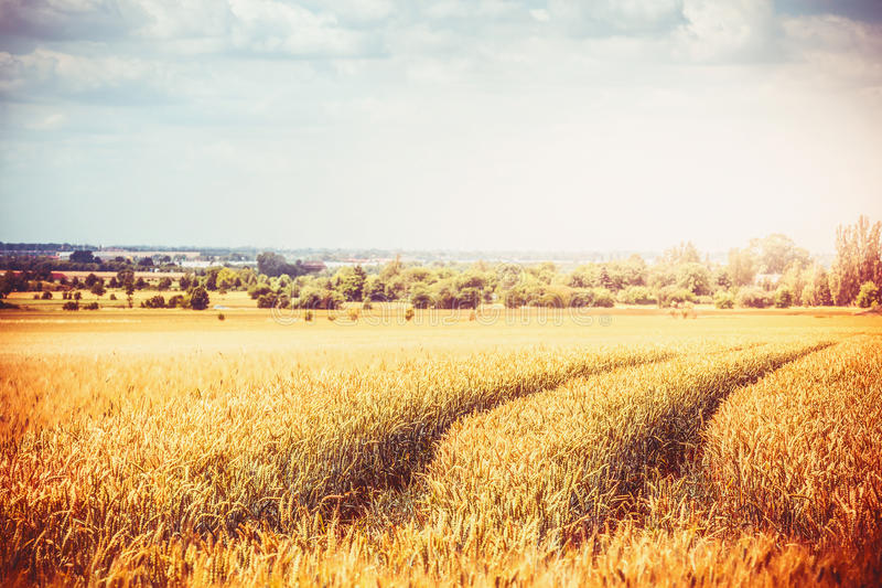 Autumn or Late summer country landscape with agriculture farm field and Traces of agricultural machinery. Ripe Cereal field royalty free stock image