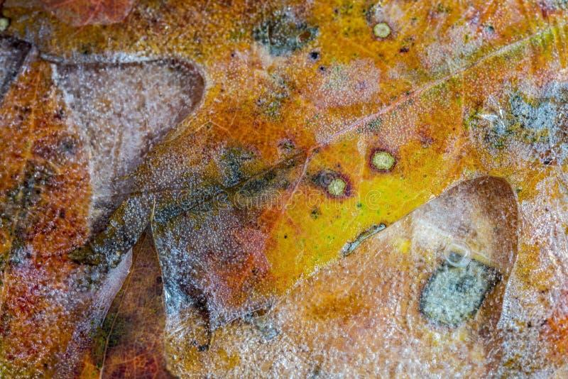 Autumn Laves fotografia de stock