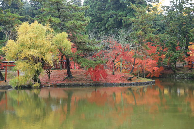 Autumn Laves in Nara Park stock afbeelding