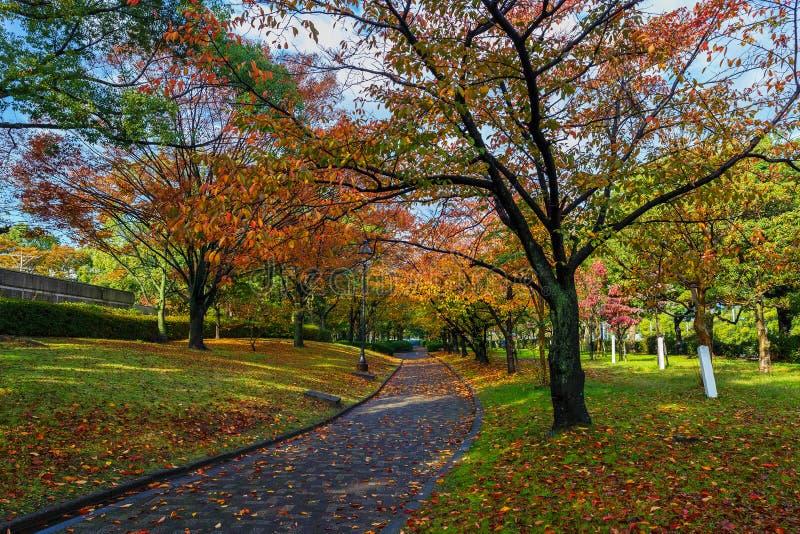 Autumn Laves no Central Park de Hiroshima foto de stock