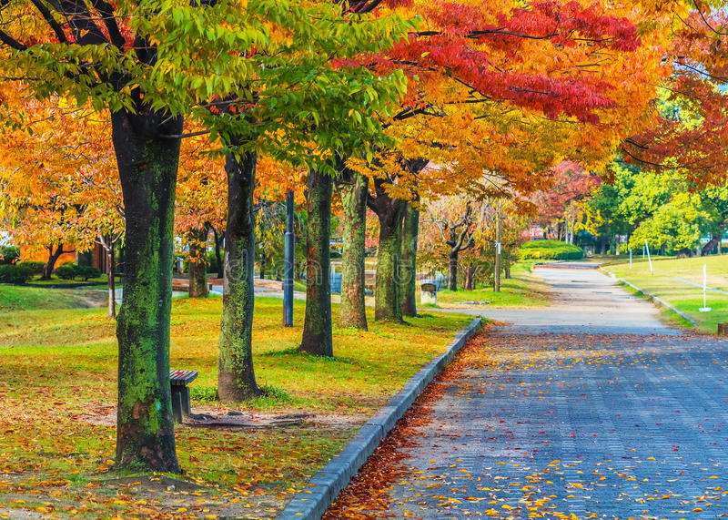 Autumn Laves no Central Park de Hiroshima imagem de stock royalty free