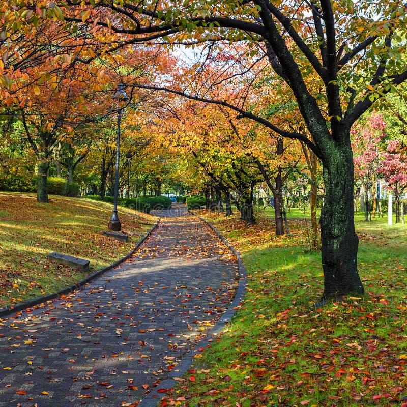 Autumn Laves no Central Park de Hiroshima em Japão imagens de stock