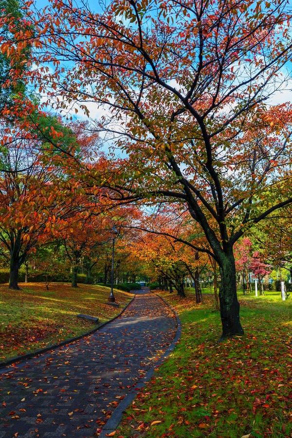 Autumn Laves no Central Park de Hiroshima em Japão imagem de stock royalty free