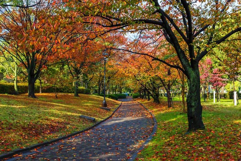 Autumn Laves no Central Park de Hiroshima em Japão fotografia de stock