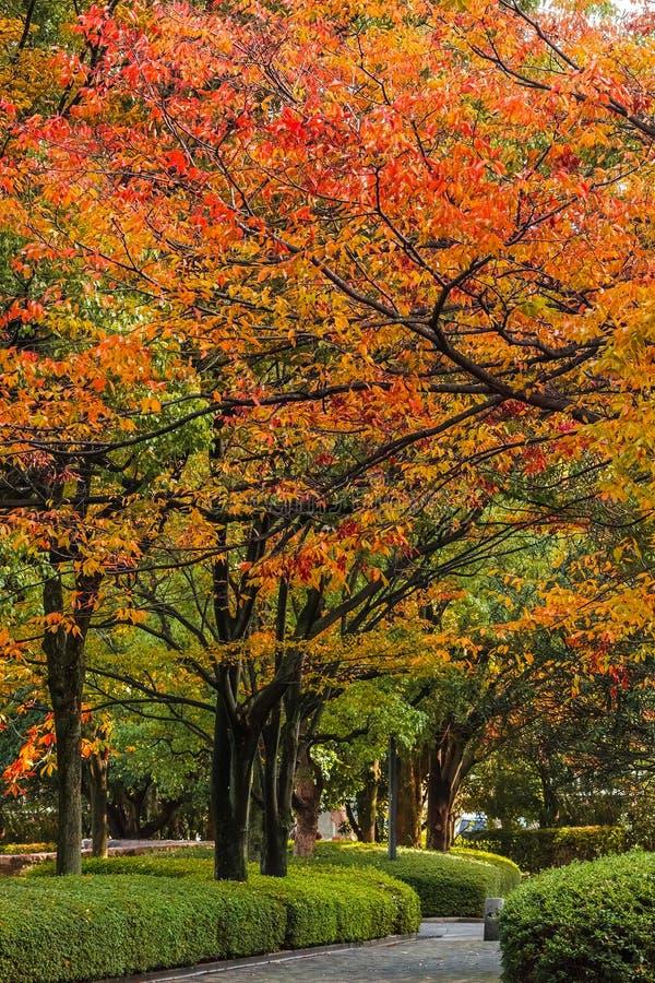 Autumn Laves på den Hiroshima Central Park i Japan royaltyfria bilder