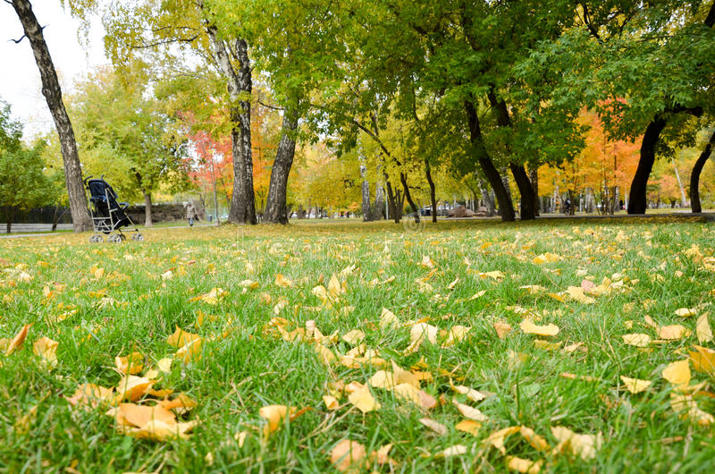 Autumn lawn royalty free stock images