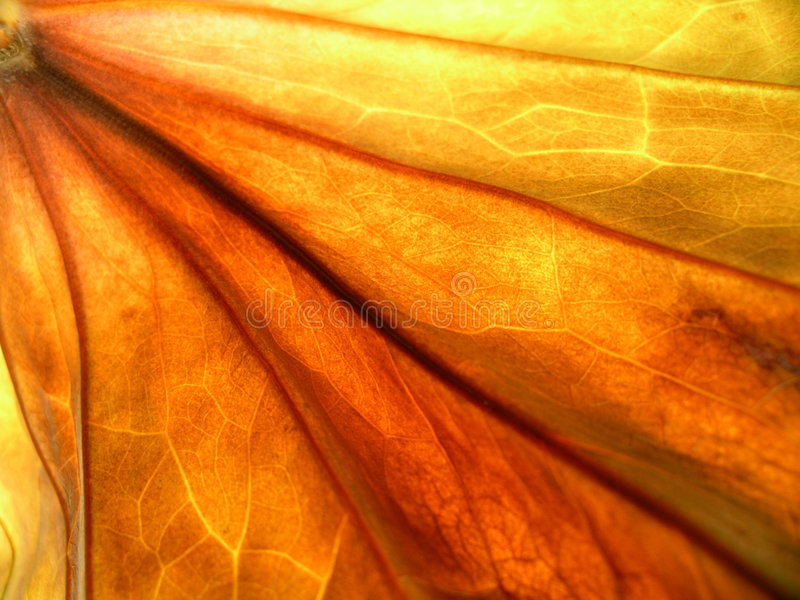 Download Autumn leaf stock photo. Image of decay, abstract, chlorophill - 1414864