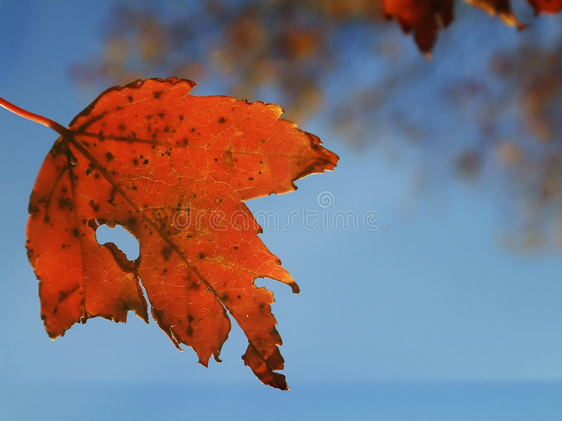 Download Autumn leaf stock image. Image of orange, blue, decay, autumn - 30703