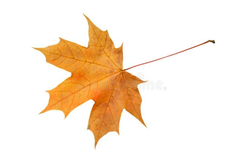 Autumn Leaf royalty-vrije stock afbeeldingen