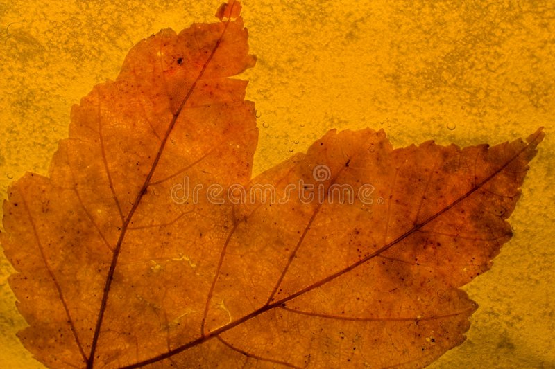 Download Autumn leaf stock photo. Image of change, golden, closeup - 534622