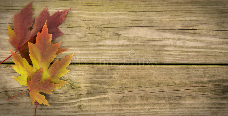 Autumn Leaf Background imagens de stock royalty free