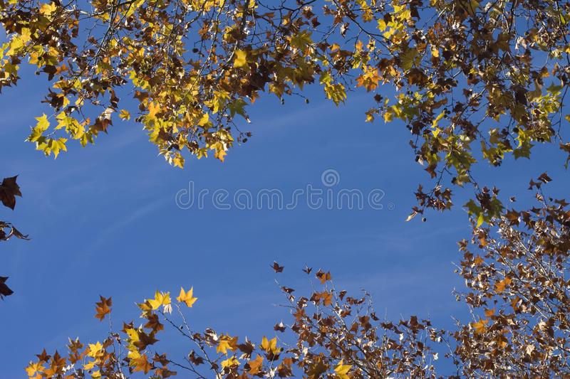 Autumn leaf background stock photography