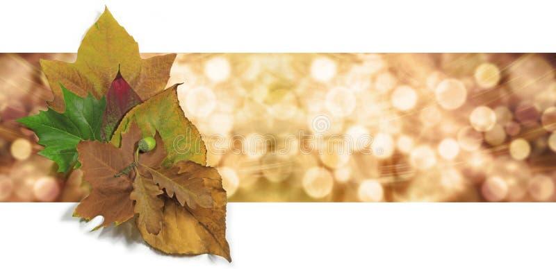 Autumn Leaf Bokeh Website Banner fotografía de archivo libre de regalías