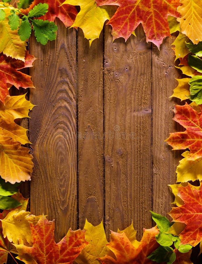 Download Autumn leaf border stock photo. Image of autumnal, wood - 7024806