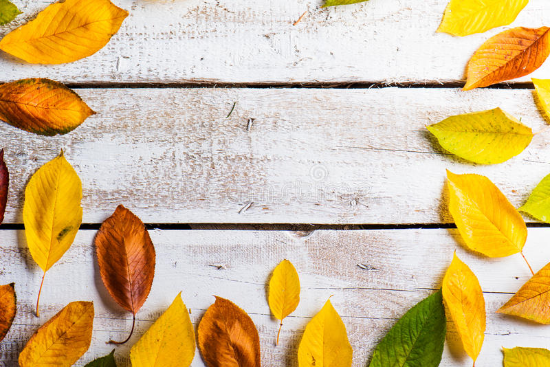 Autumn Leaf Composition royalty-vrije stock foto