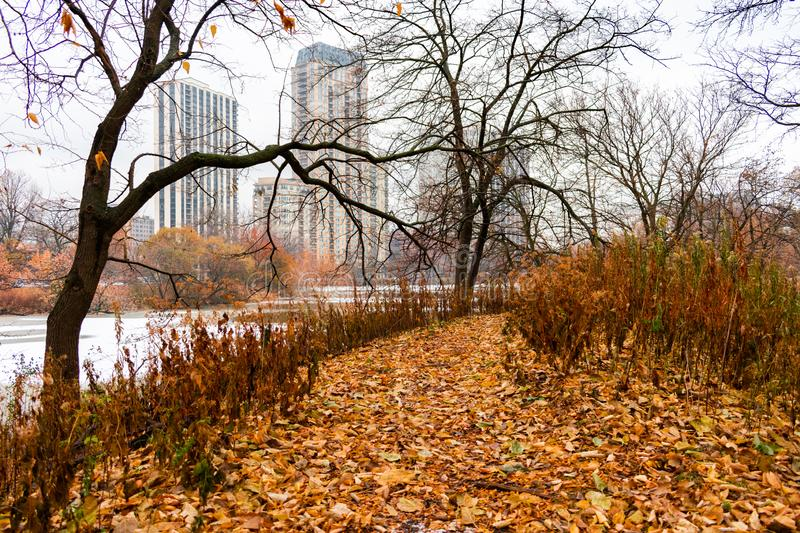 Autumn Leaf Covered Trail naast het Noordenvijver in Lincoln Park Chicago royalty-vrije stock afbeelding