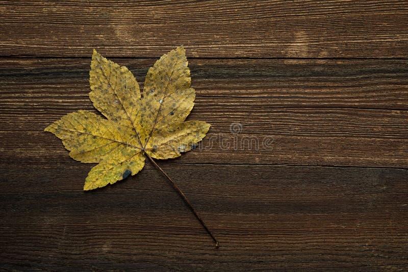 Autumn leaf on dark wood stock photo