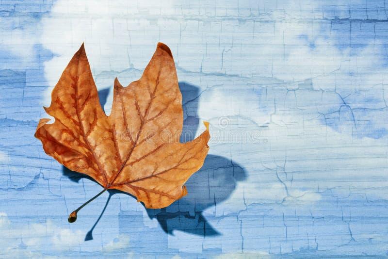 Autumn Leaf. Dead autumn leaf on blue cracked cloud background symbolizing environmental decay concept stock photos
