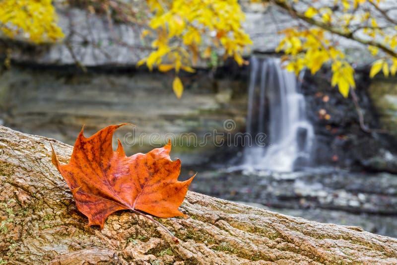 Autumn Leaf e cachoeira imagens de stock