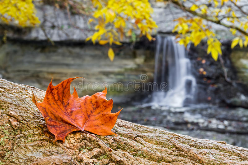 Autumn Leaf et cascade images stock