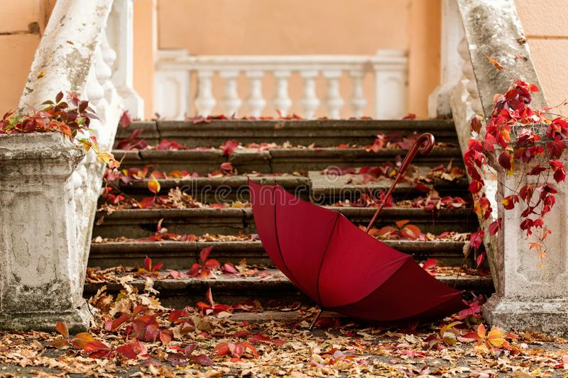 Autumn leaf fall. Red and yellow leaves on the destroyed old stone steps burgundy (marsala color) umbrella. stock photo