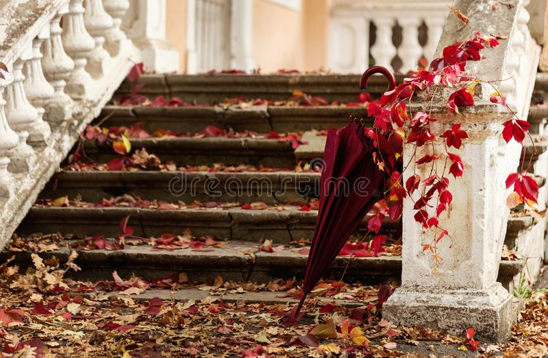 Autumn leaf fall. Red and yellow leaves on the destroyed old stone steps burgundy (marsala color) umbrella. Autumn leaf fall. Red and yellow leaves on the stock image