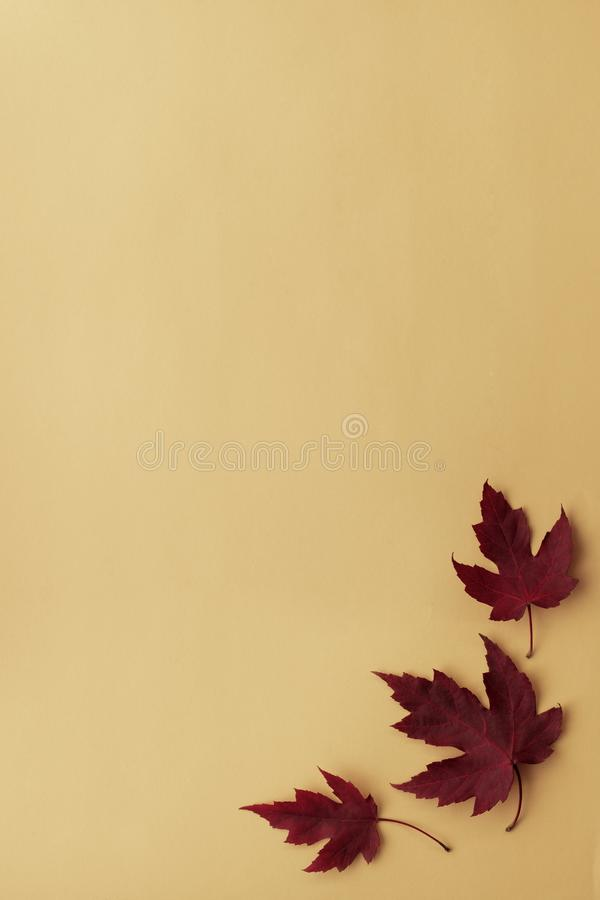 Autumn leaf flat lay composition. Frame from red maple leaves on orange paper background. Autumn concept. Fall leaves design. Top. View, copy space stock photography