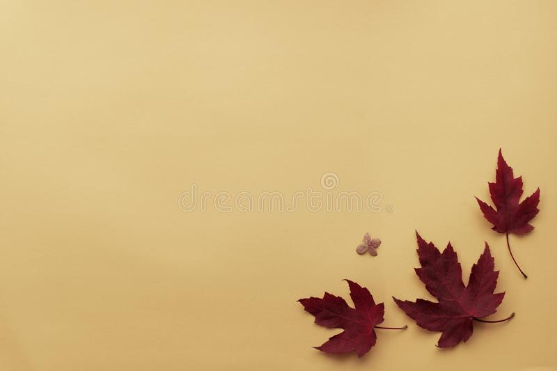 Autumn leaf flat lay composition. Frame from red maple leaves on orange paper background. Autumn concept. Fall leaves design. Top royalty free stock images