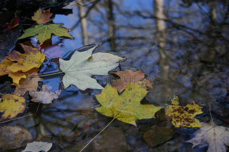 Download Autumn Leaf Floating On Surface Of Water Stock Image - Image of stream, nature: 111763