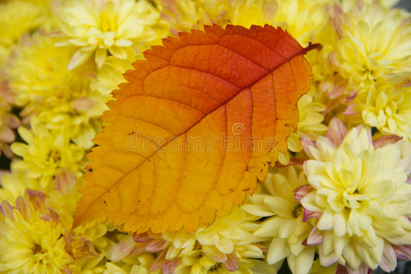 Download Autumn leaf and flowers stock photo. Image of bright - 17017824