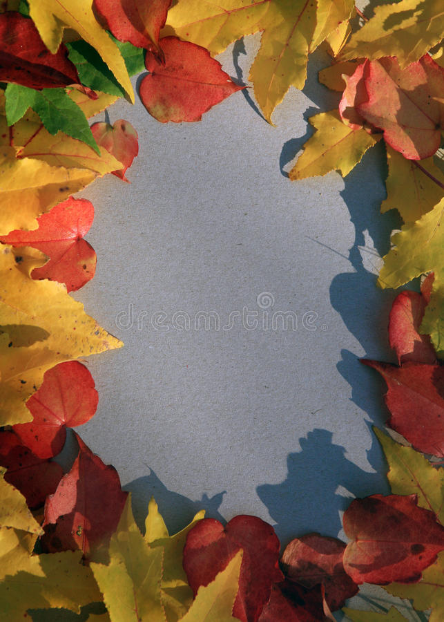 Download Autumn Leaf Frame stock photo. Image of weathered, dried - 22051380