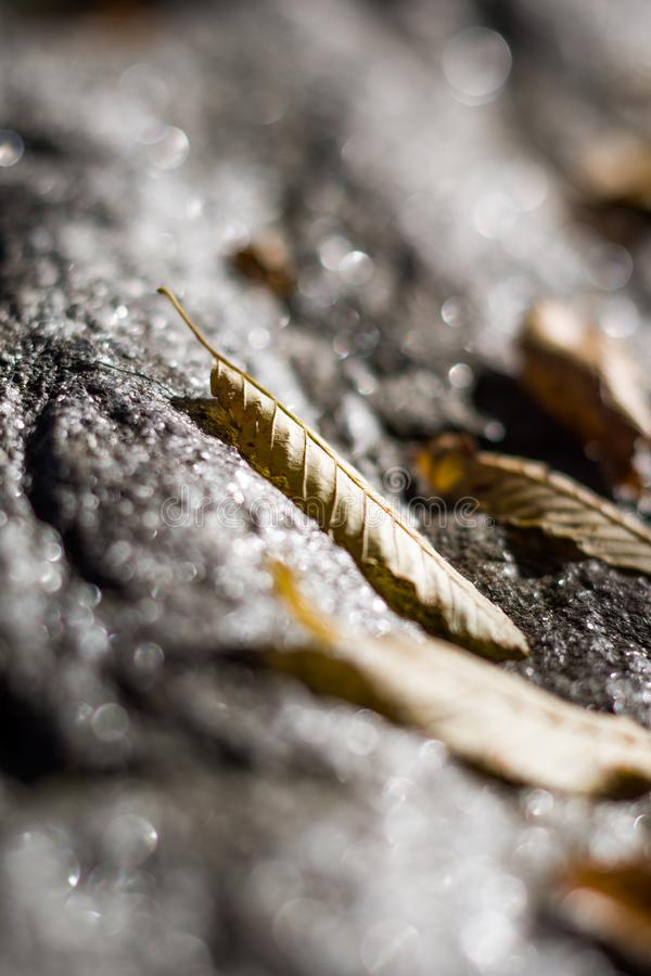 Autumn leaf on the grey rock. Fallen yellow isolated autumn leaf on the sparkling blurred wet grey rock, mountain royalty free stock images