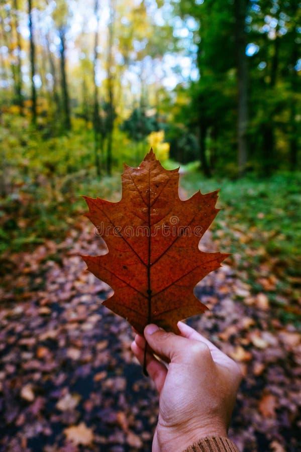 Autumn Leaf Free Public Domain Cc0 Image