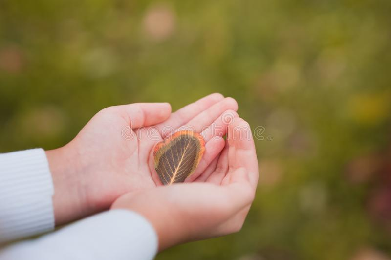 Autumn leaf in the hands of a child close-up. The concept of autumn, the care of nature in the form of a leaf in the hands and cop royalty free stock photo