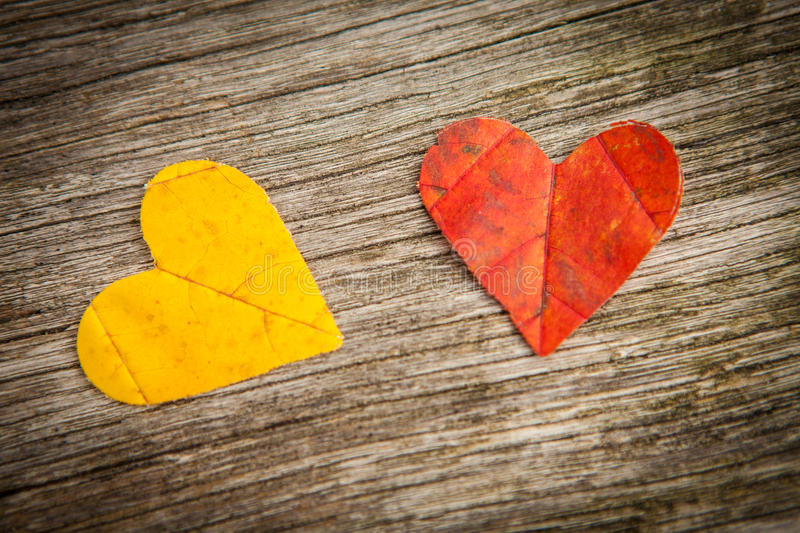 Autumn leaf love hearts stock images