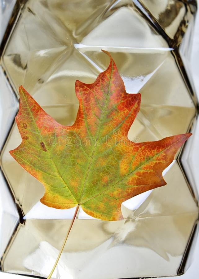 One Fall Leaf full of Many Colors with Geometric Background. Autumn Leaf Lying on Beautiful Glass Geometric Shapes for Backround. Awesome Fall Colors stock photo