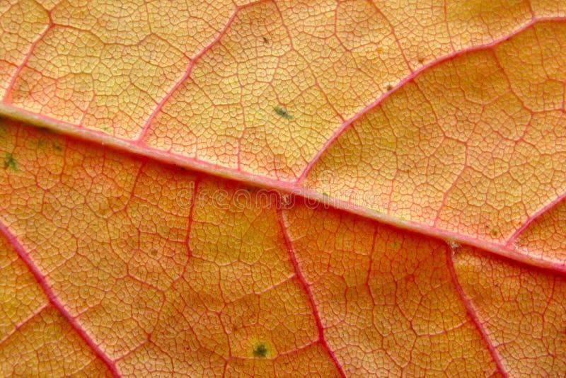 Autumn leaf macro stock photo