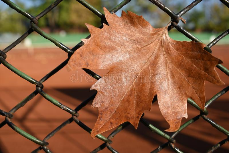 Autumn leaf on a metal fence on a blurred background of a ground tennis court. The end of the season royalty free stock photography