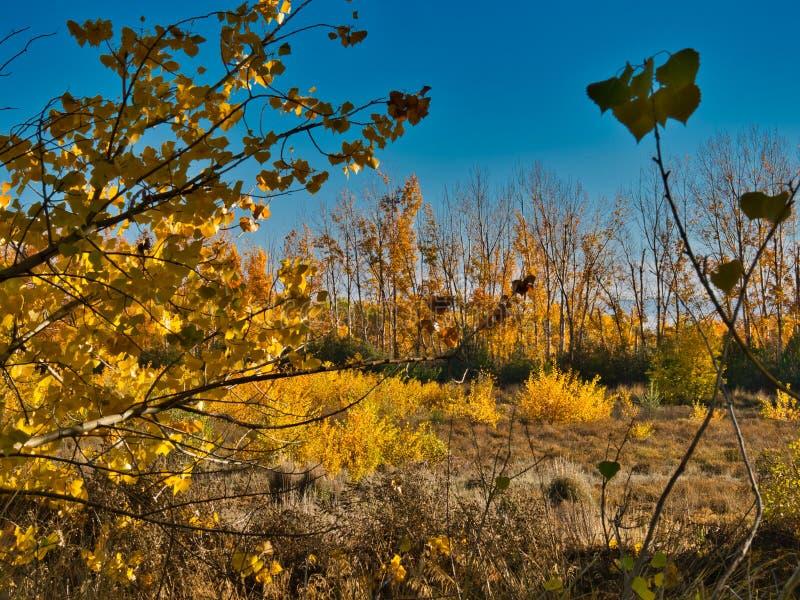 Autumn Leaf Montage fotografía de archivo