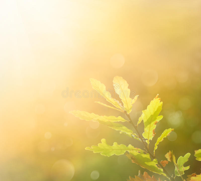 Autumn leaf in the morning stock images