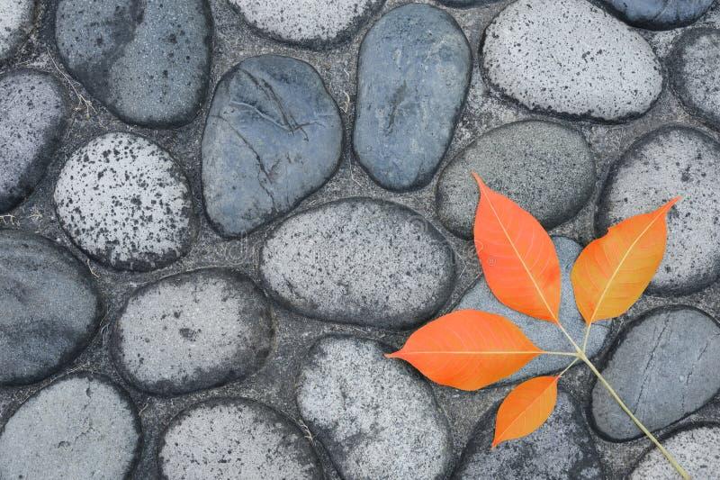 Download Autumn leaf stock image. Image of leaf, lane, footpath - 58685261