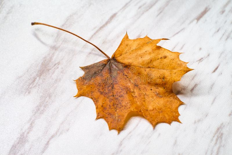 Autumn Leaf Orange Marble fotos de stock royalty free