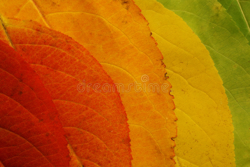 Autumn leaf palette stock photos